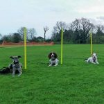 Surrey Dog Training