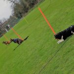 Egham Dog Training