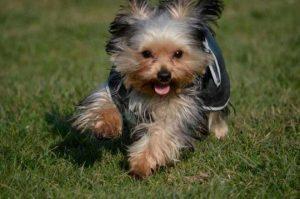 Professional Puppy Training