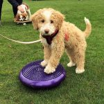 Puppy Life Skills in Surrey