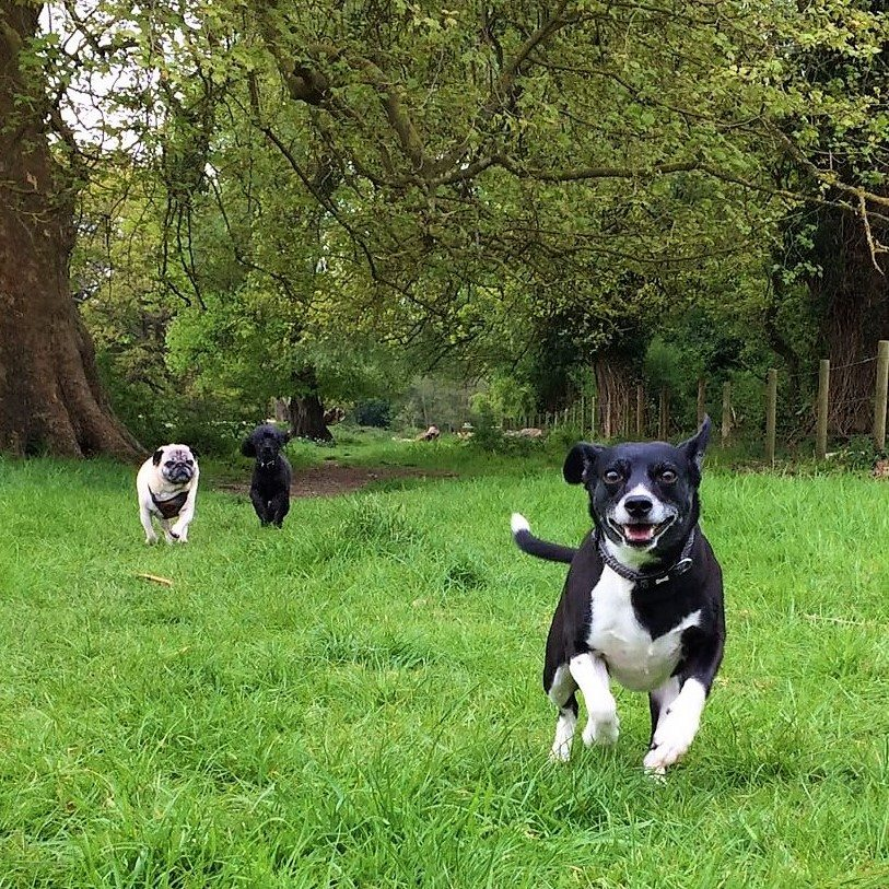 Image Result For Dog Training Classes Surrey
