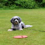 Dog Training in Egham, Surrey.