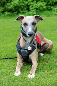 Dog Training in Egham, Surrey.