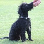 Pet Necessities Dog Training