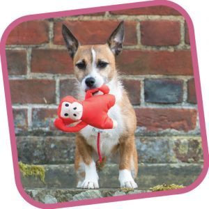 Your dog will love the Beco Michelle the Monkey dog toy