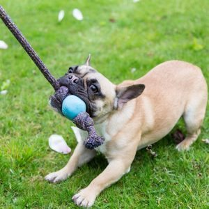 The Beco Ball on a Rope is perfect for a game of tug.