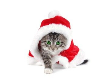 Cat Christmas Gift Guide