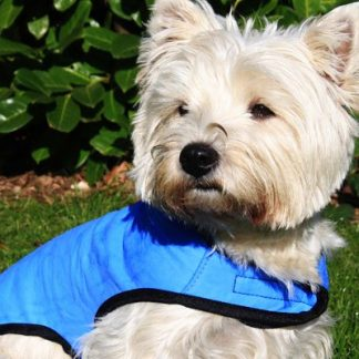 Cool Dog Cooling Dog Coat