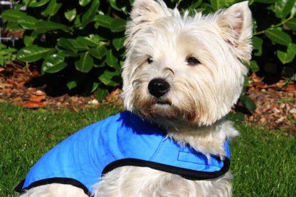 Cool Dog Cooling Dog Coat