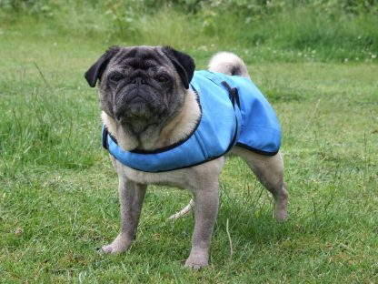 Cool Coat for Pugs