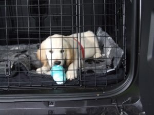 The Puppy Kong helps to give positive associations to areas such as crates or cars.