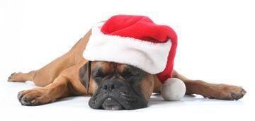 Dog Christmas Gift Guide