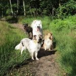 Dog Walking and Pet Care