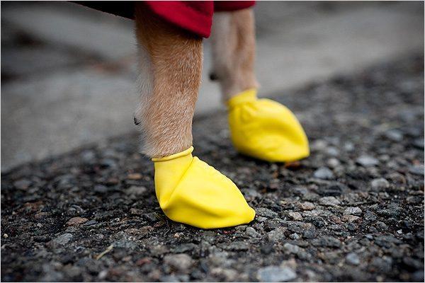 pawz boots