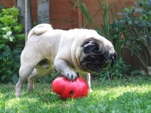 Small Kong Wobbler