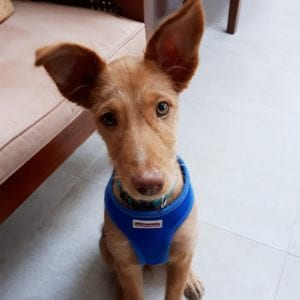 Egham Puppy Visits