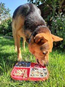 LickiMat Slomo with dog